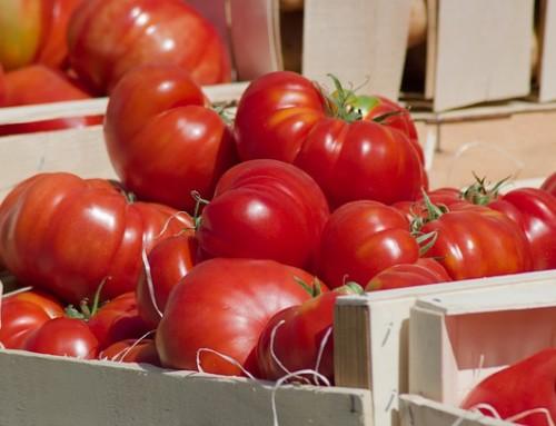 Vendedores alimentación en Madrid: Eco